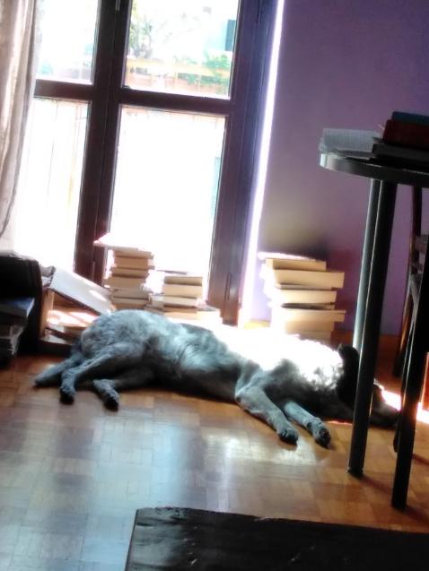 Passioni al sole