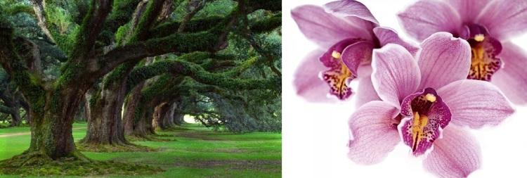 orchidee e querce